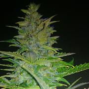 thegreengrower