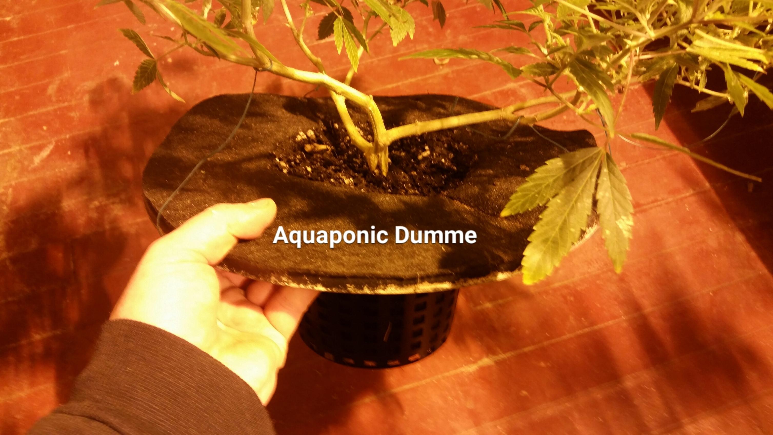Custom Smartpot of Aeroponic-Soi hybrid