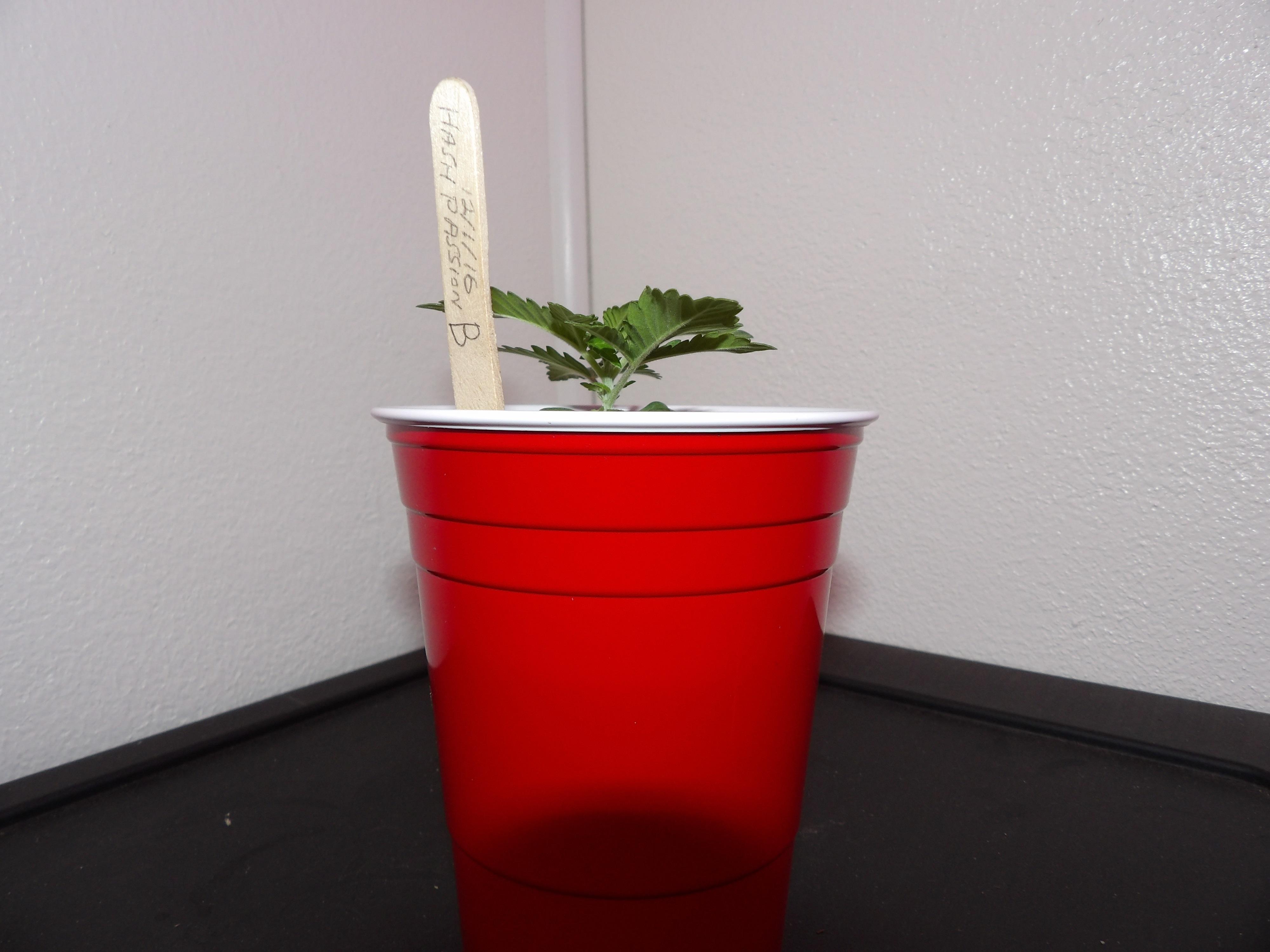 Plant B
