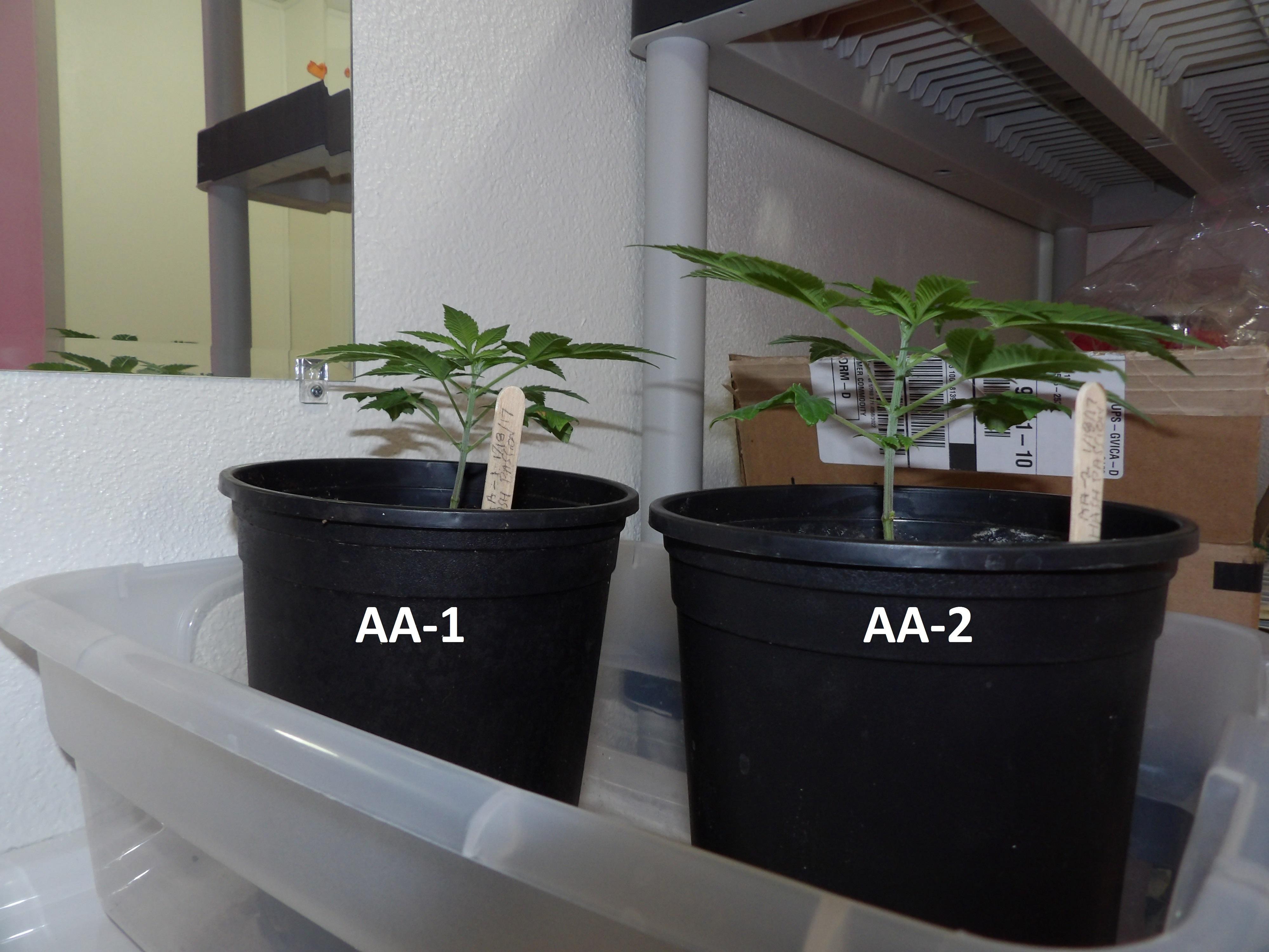 AA-1 and AA-2 1-29-17