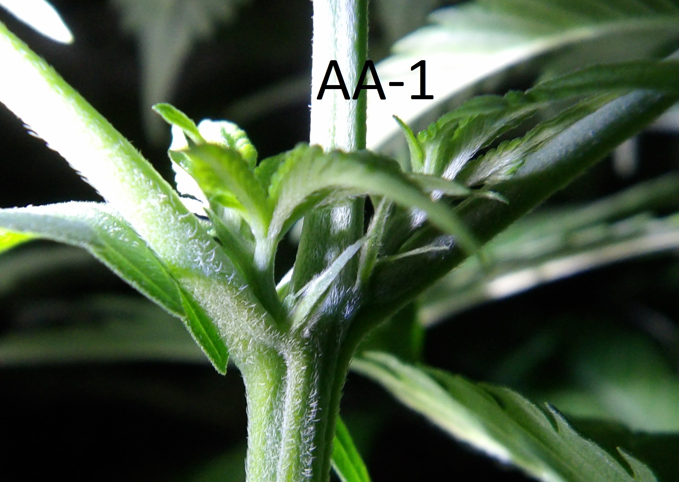 This one is mislabeled, it's actually plant A and looks like it's a girl.
