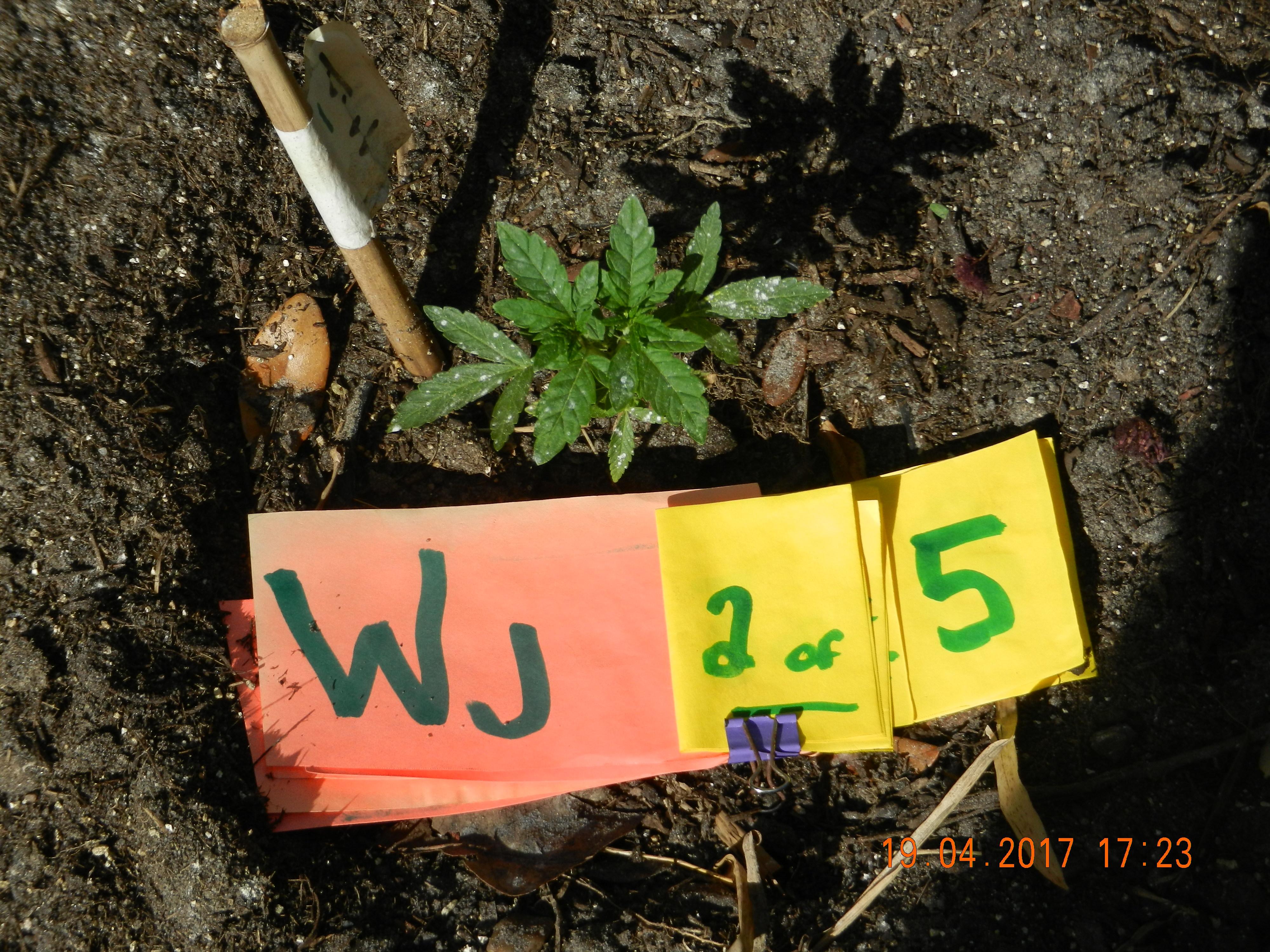 WJ 2 of 5