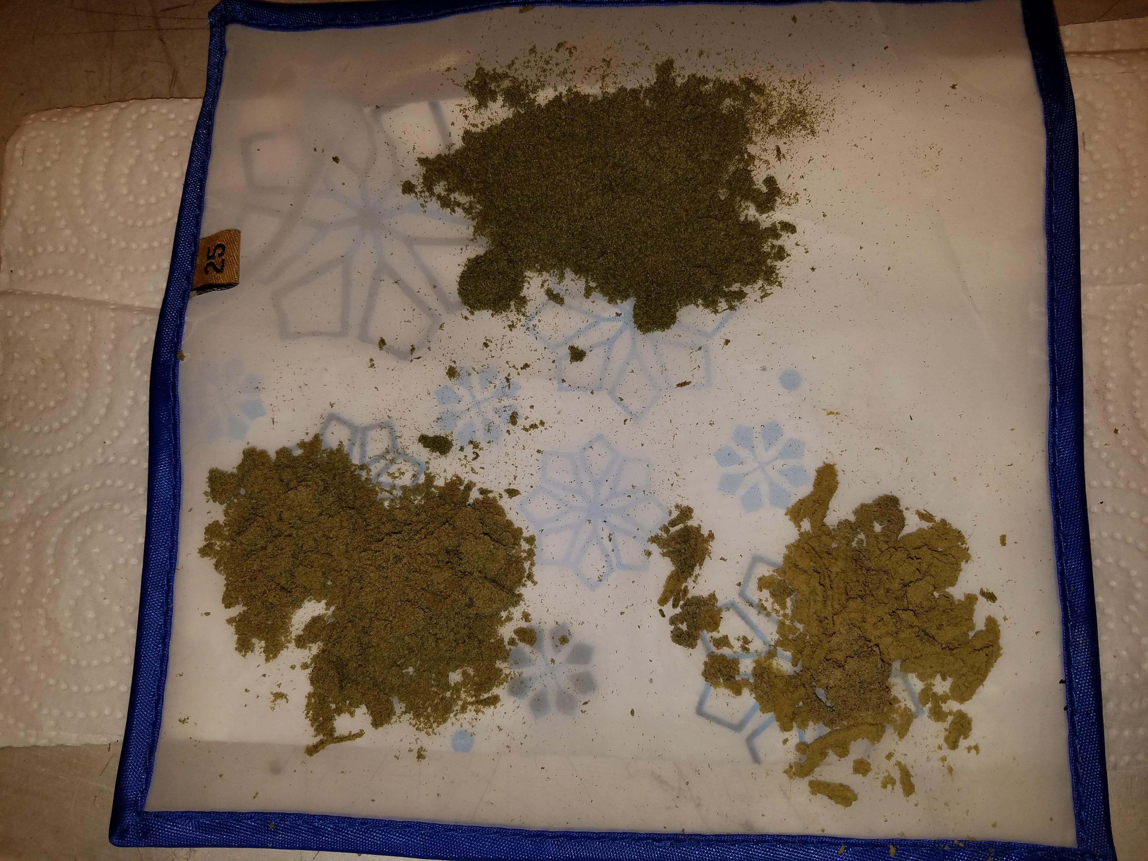 Front right all Blond Kief